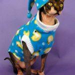 Chat pyjama humour