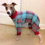 Chien pyjama
